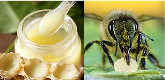Sua ong chua va cong dung sua ong chua