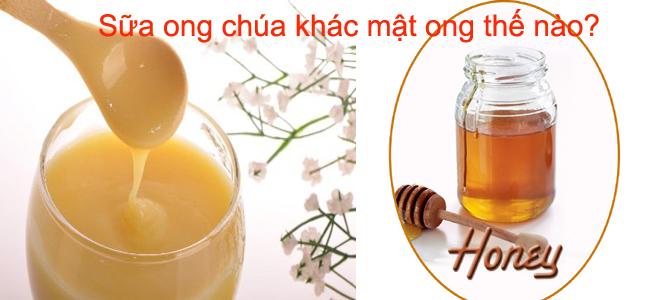 sữa ong chúa khác mật ong như thế nào