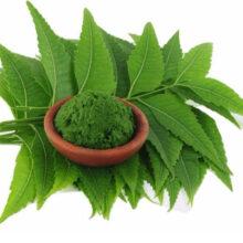 Bột lá neem Ấn