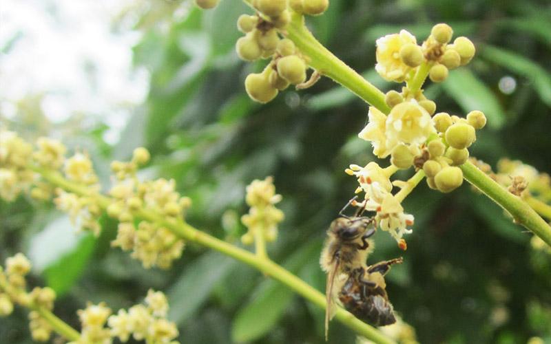 Mật ong nhãn Thảo Mộc Xanh
