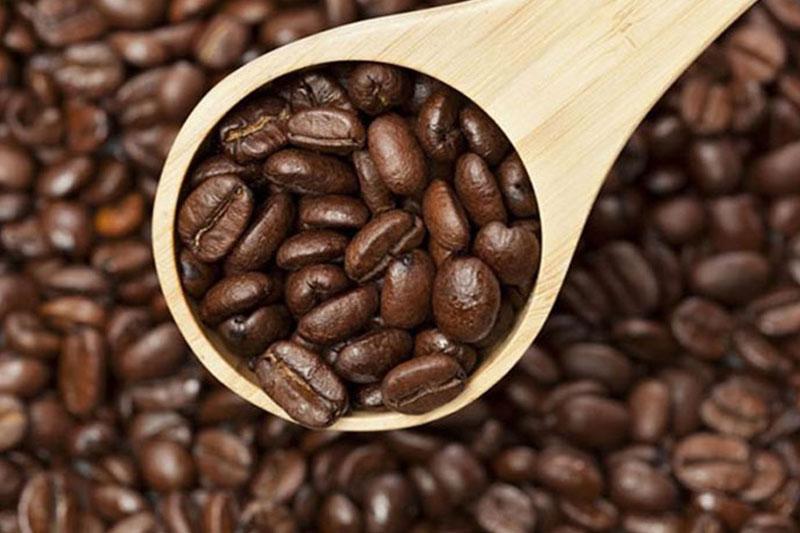 Hạt cà phê Robusta Thảo Mộc Xanh giá rẻ