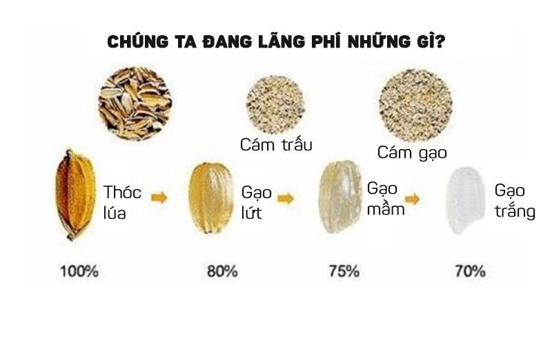 Cám gạo có tác dụng gì