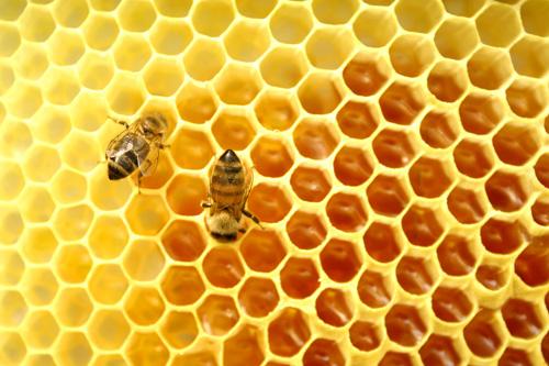 Banh plan ngon lanh voi mat ong